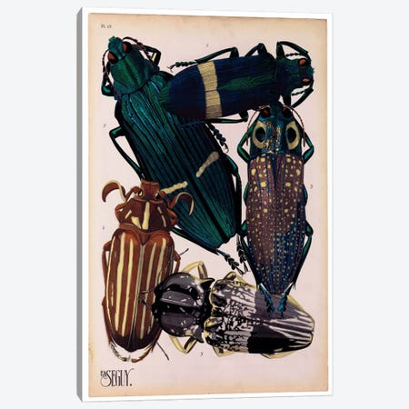 Insects, Plate 4 by E.A. Seguy Canvas Print #PCA216} by Print Collection Canvas Print