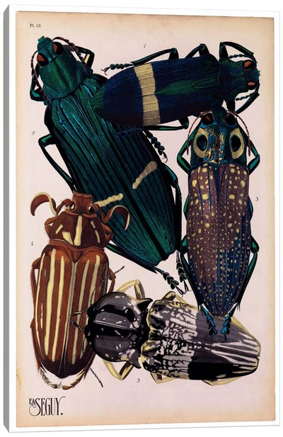 Insects, Plate 4 by E.A. Seguy Canvas Print #PCA216