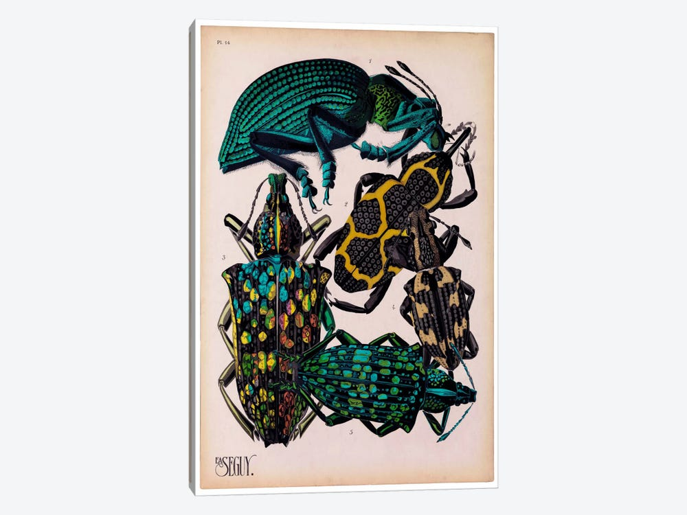 Insects, Plate 6 by E.A. Seguy by Print Collection 1-piece Canvas Wall Art