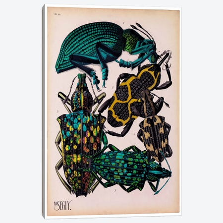 Insects, Plate 6 by E.A. Seguy Canvas Print #PCA217} by Print Collection Canvas Art Print