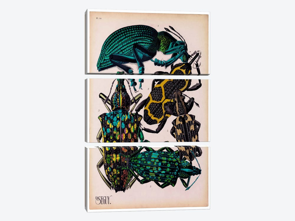 Insects, Plate 6 by E.A. Seguy by Print Collection 3-piece Canvas Artwork