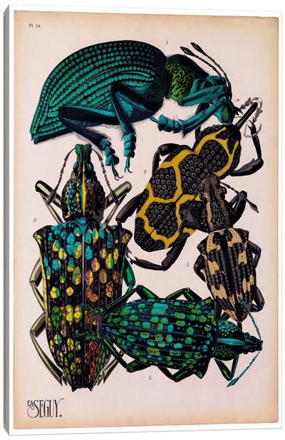 Insects, Plate 6 by E.A. Seguy Canvas Art Print