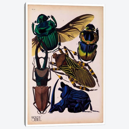 Insects, Plate 7 by E.A. Seguy Canvas Print #PCA218} by Print Collection Canvas Artwork
