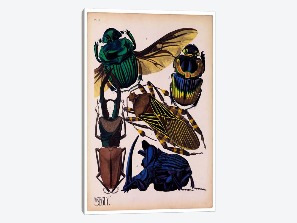 Insects, Plate 7 by E.A. Seguy 1-piece Canvas Art Print