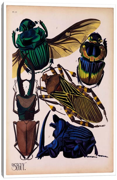 Insects, Plate 7 by E.A. Seguy Canvas Art Print
