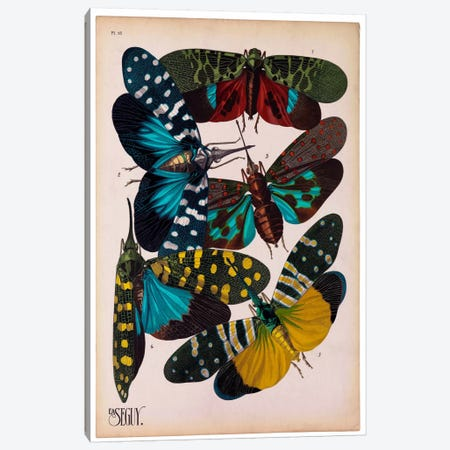 Insects, Plate 8 by E.A. Seguy Canvas Print #PCA219} by Print Collection Canvas Wall Art