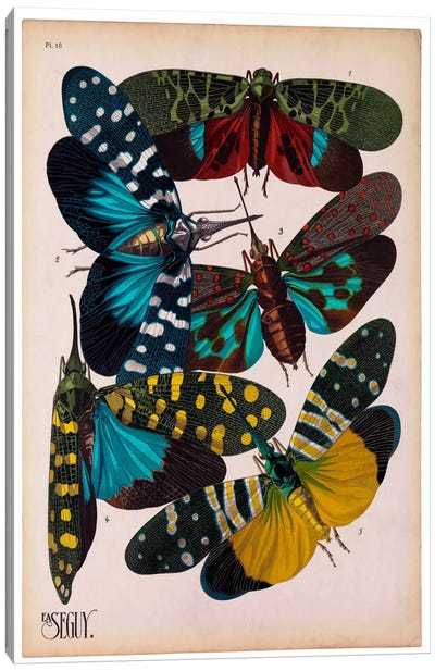 Insects, Plate 8 by E.A. Seguy Canvas Print #PCA219