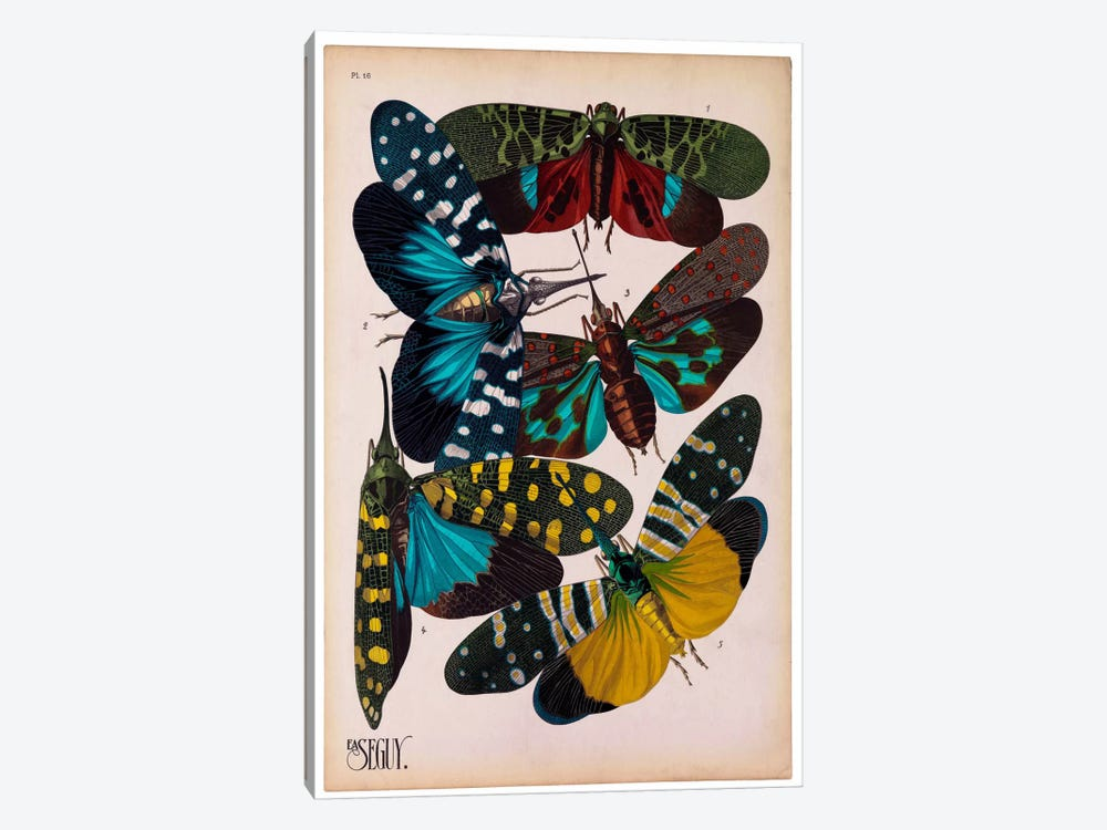 Insects, Plate 8 by E.A. Seguy by Print Collection 1-piece Canvas Art