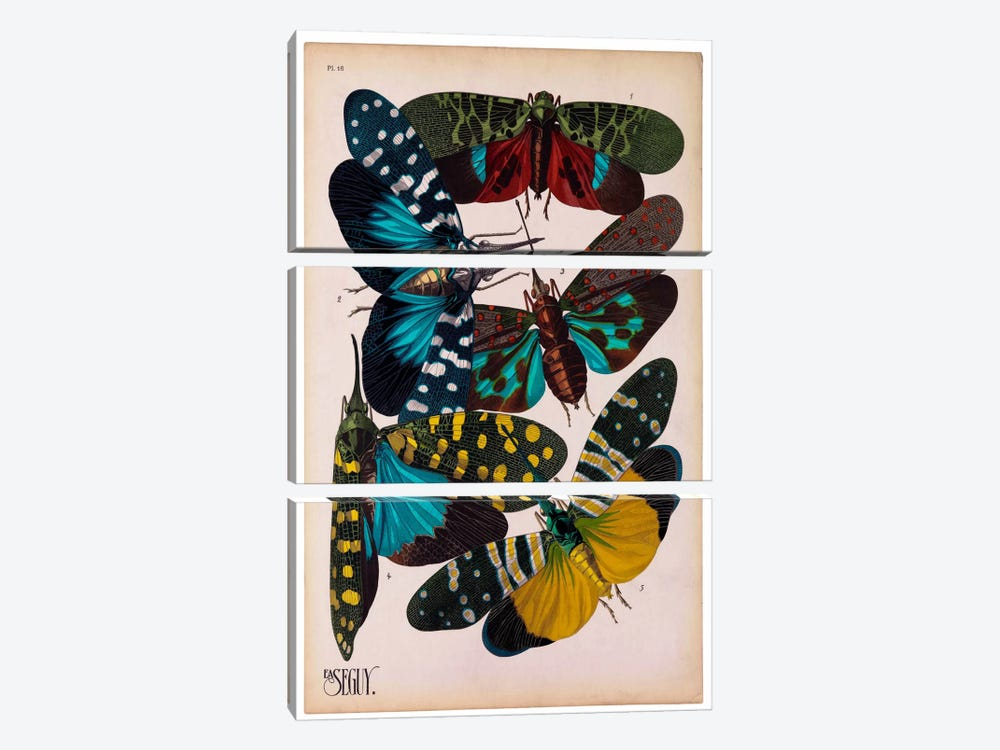 Insects, Plate 8 by E.A. Seguy by Print Collection 3-piece Canvas Artwork