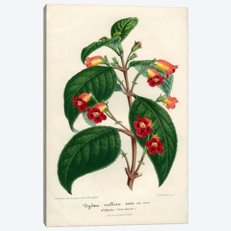 Kohleria of Central America Canvas Print #PCA222} by Print Collection Canvas Art Print