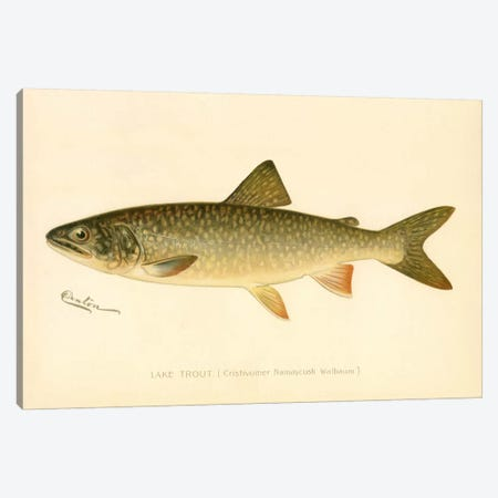 Lake Trout Canvas Print #PCA223} by Print Collection Canvas Art Print