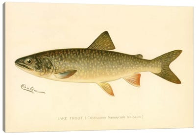 Lake Trout Canvas Print #PCA223