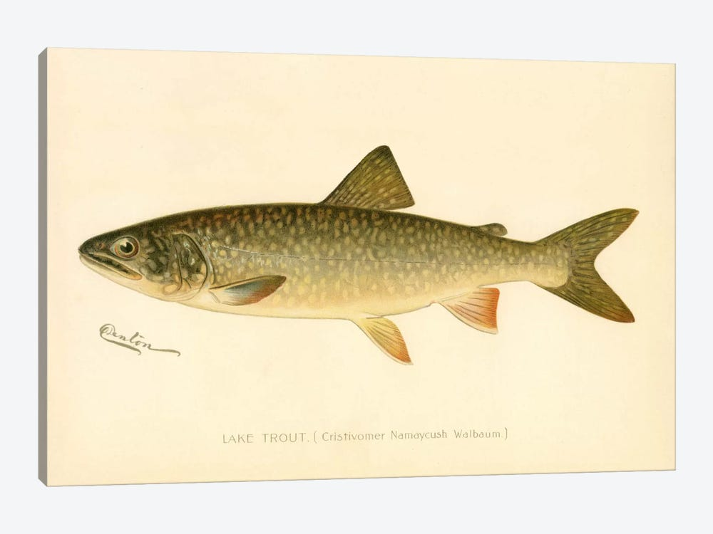Lake Trout by Print Collection 1-piece Canvas Art Print