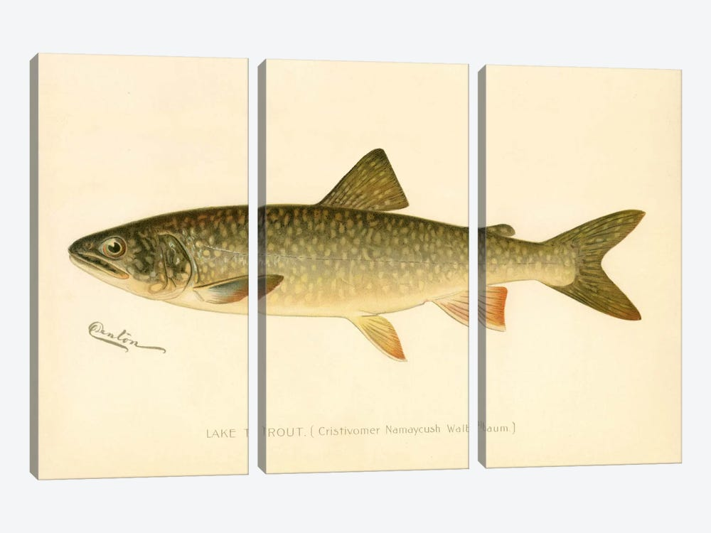 Lake Trout by Print Collection 3-piece Canvas Art Print