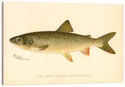 Lake Trout Canvas Art Print