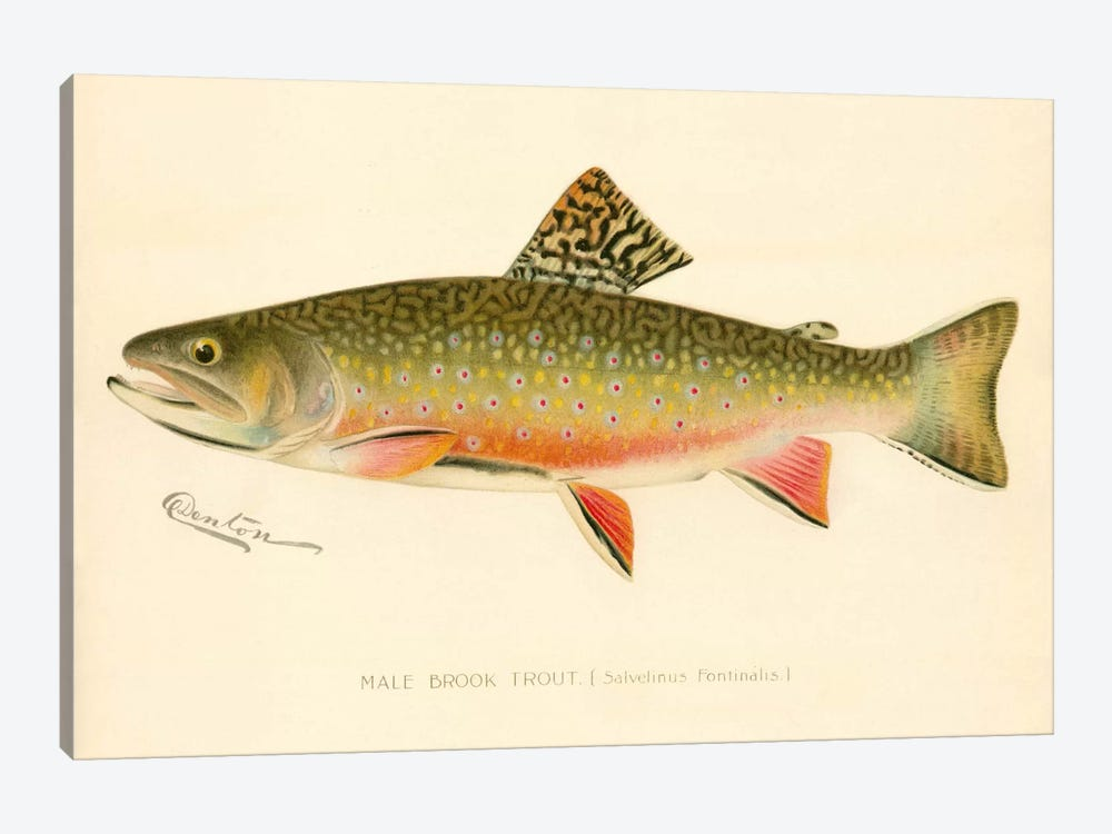 Male Brook Trout by Print Collection 1-piece Canvas Art