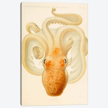 Octopus - Die Cephalopod - 1915 - Plate 76 Canvas Print #PCA232} by Print Collection Canvas Artwork