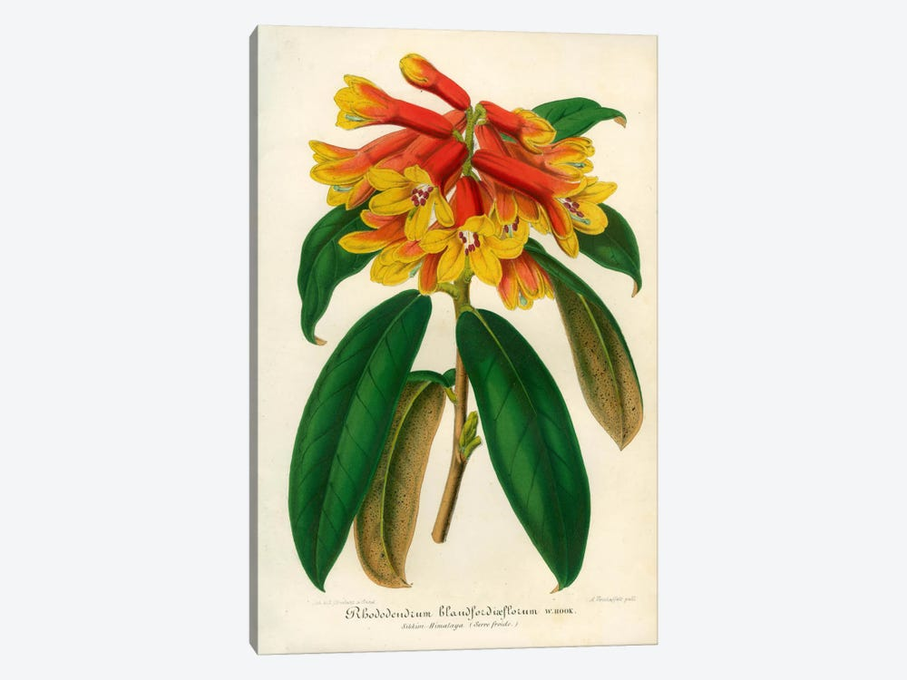 Orange Yellow Rhododendron by Print Collection 1-piece Canvas Wall Art