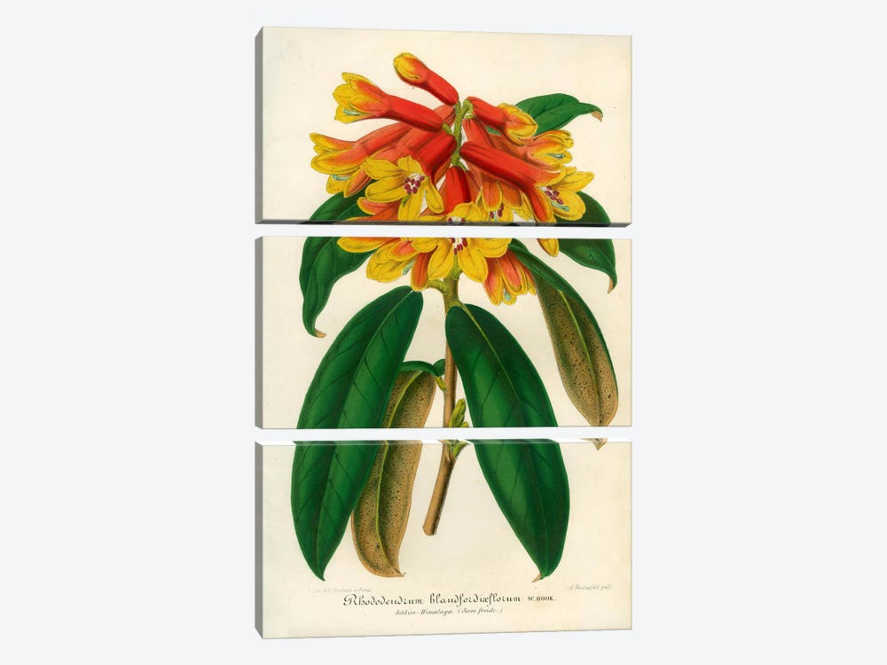 Orange Yellow Rhododendron by Print Collection 3-piece Canvas Wall Art