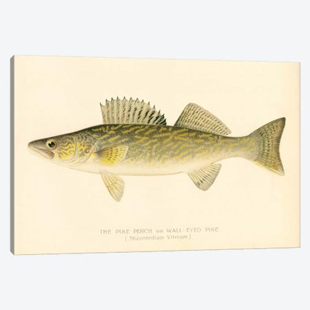 Pike Perch Canvas Print #PCA242} by Print Collection Art Print