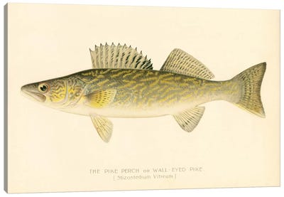 Pike Perch Canvas Art Print