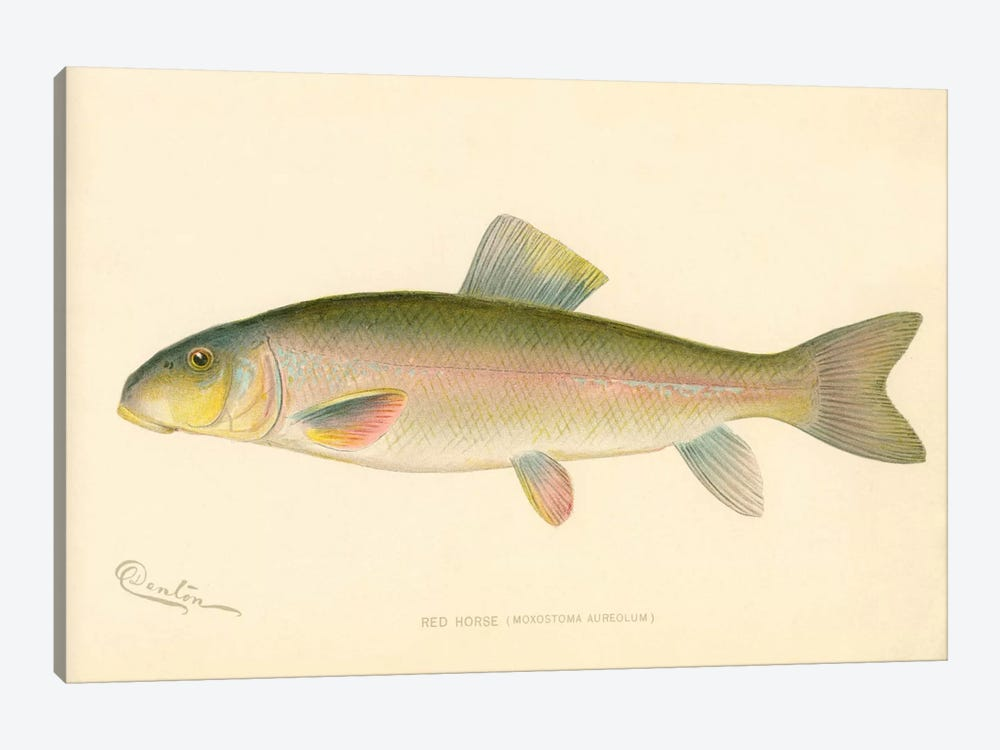 Red Horse Fish by Print Collection 1-piece Art Print