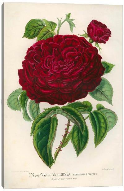 Rose Victor Trouillard Canvas Print #PCA246