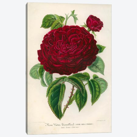 Rose Victor Trouillard Canvas Print #PCA246} by Print Collection Canvas Wall Art