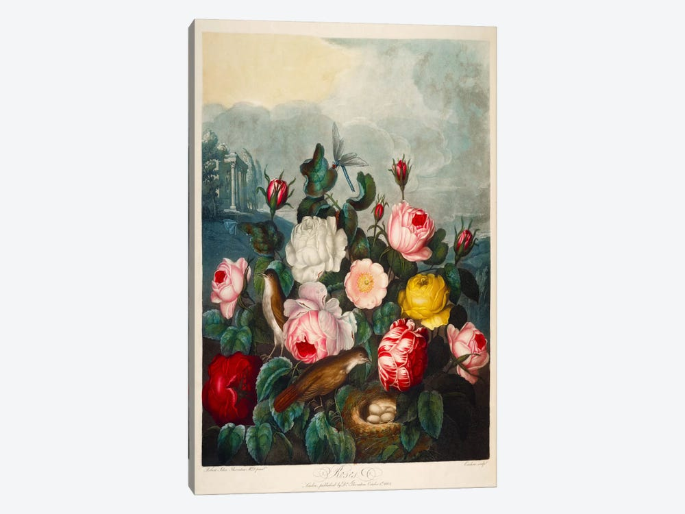 Roses by Thornton by Print Collection 1-piece Canvas Print