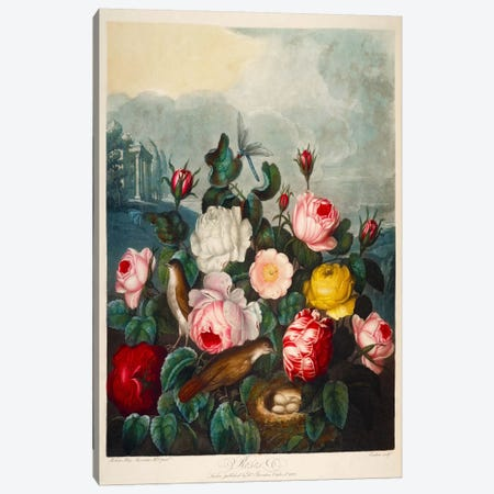 Roses by Thornton Canvas Print #PCA247} by Print Collection Canvas Artwork