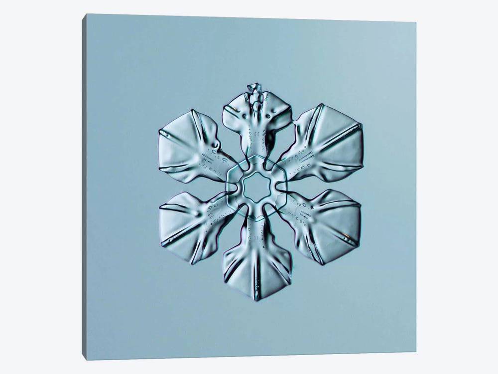 Sectored Plate Snowflake 001.3.02.2014 by Print Collection 1-piece Art Print