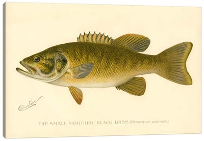 Small Mouthed Black Bass Canvas Art Print