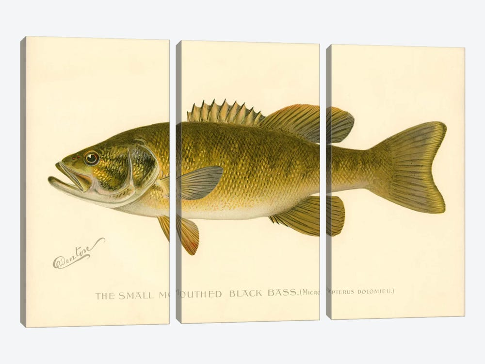 Small Mouthed Black Bass by Print Collection 3-piece Canvas Art