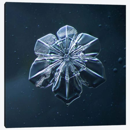Snowflake 009.2.9.2014 Canvas Print #PCA254} by Print Collection Art Print