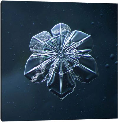 Snowflake 009.2.9.2014 Canvas Art Print
