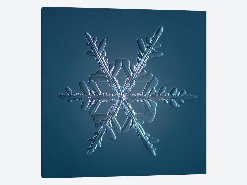 Stellar Dendrite Snowflake 005.2.16.2014 by Print Collection 1-piece Canvas Artwork