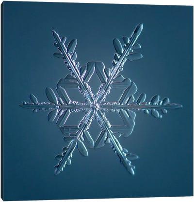 Stellar Dendrite Snowflake 005.2.16.2014 Canvas Art Print