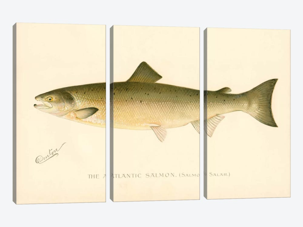 The Atlantic Salmon by Print Collection 3-piece Canvas Art