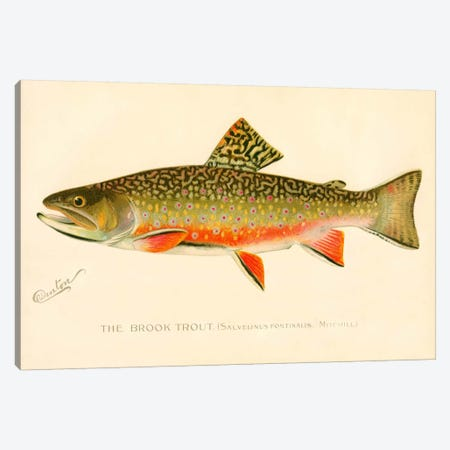The Brook Trout Canvas Print #PCA264} by Print Collection Canvas Artwork