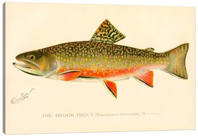 The Brook Trout Canvas Art Print
