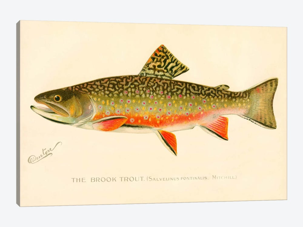 The Brook Trout by Print Collection 1-piece Canvas Wall Art