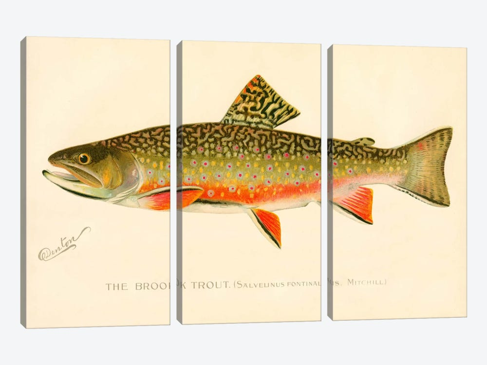 The Brook Trout by Print Collection 3-piece Canvas Wall Art