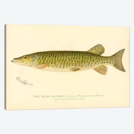 The Mascalonge Canvas Print #PCA265} by Print Collection Canvas Artwork