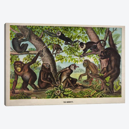 The Monkeys Canvas Print #PCA267} by Print Collection Canvas Wall Art