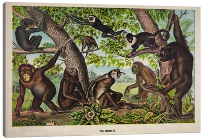 The Monkeys Canvas Art Print
