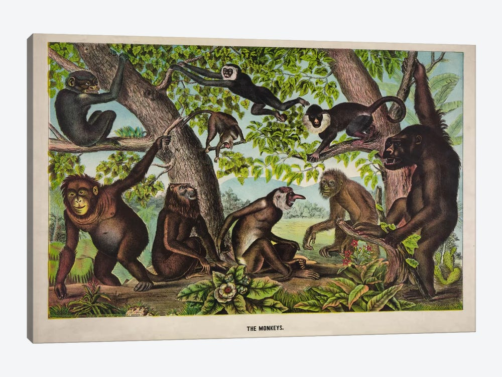The Monkeys by Print Collection 1-piece Canvas Art Print