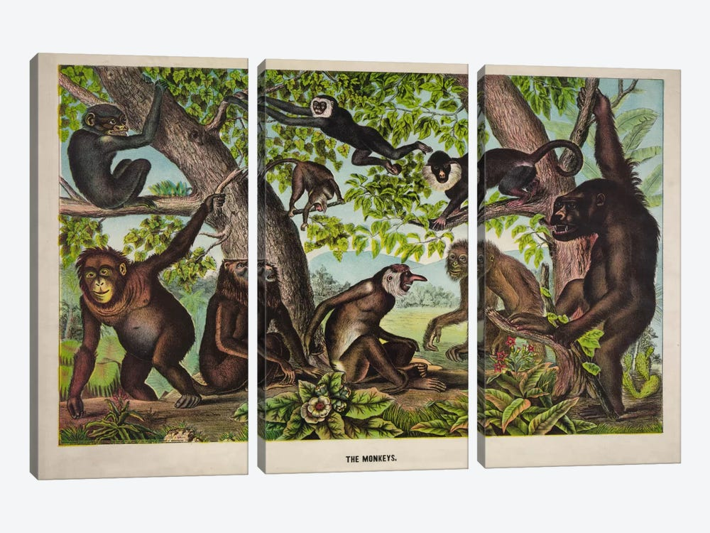 The Monkeys by Print Collection 3-piece Canvas Print