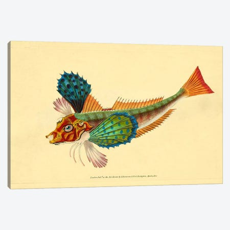 The Natural History of British Fishes - Plate 1 Canvas Print #PCA268} by Print Collection Canvas Art Print
