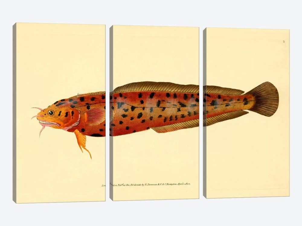 The Natural History of British Fishes - Plate 2 by Print Collection 3-piece Canvas Art Print