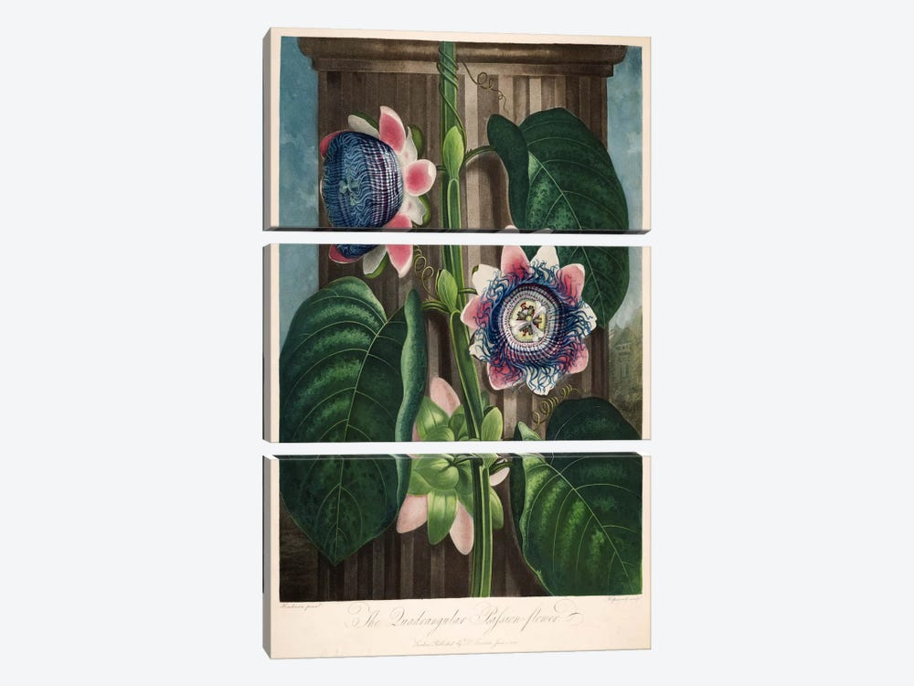 The Quadrangular Passion-Flower by Print Collection 3-piece Canvas Wall Art